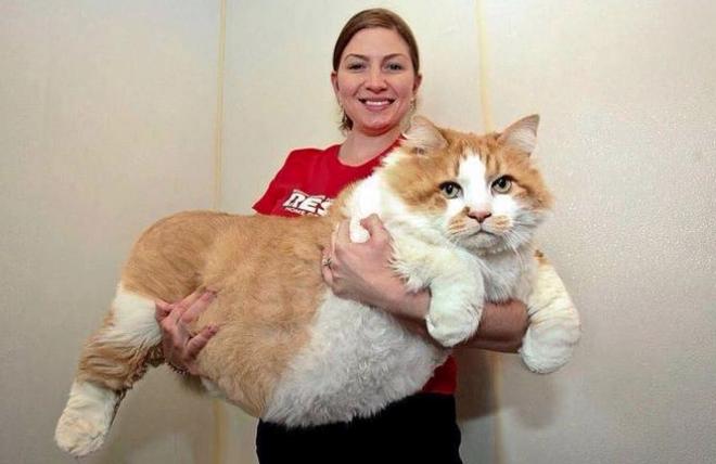 Gigantikus méretű macskák, akik már nem pici házikedvencek...