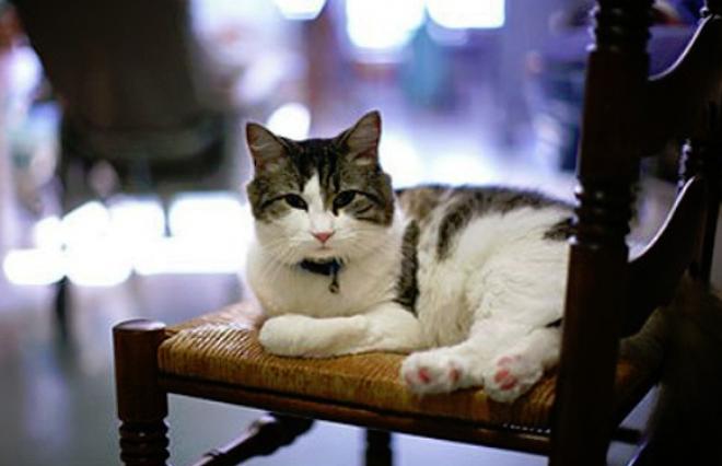 Egy macska, aki megérzi a halált! Több mint 50 esetet jegyzetek fel!