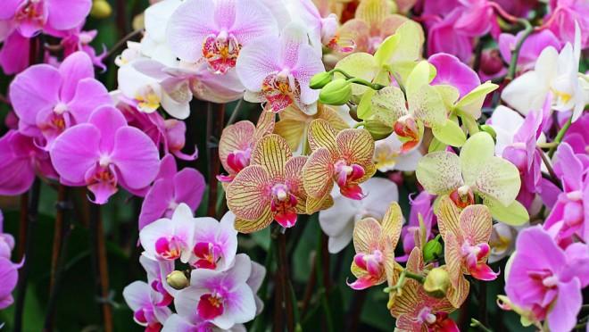 Filléres szuper trükk, amitől egész évben szépen virágoznak a szobanövényeid!
