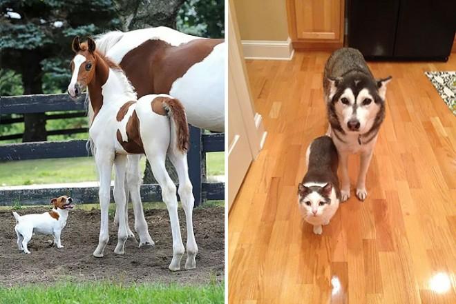 Állati jó párosok, akik le sem tagadhatnák a hasonlóságot! Pedig más-más fajták!
