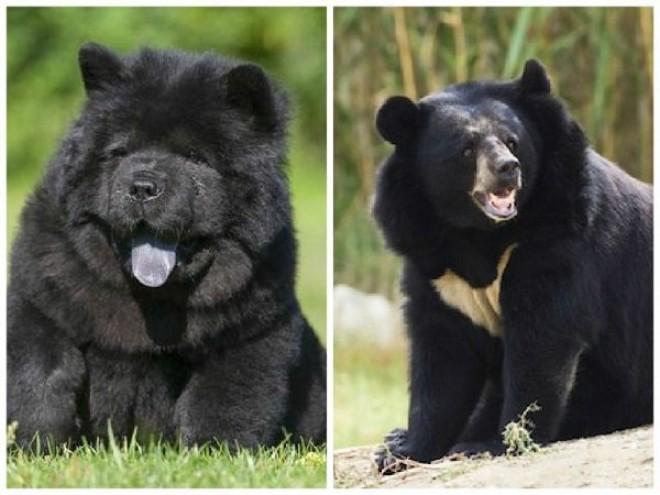 ELKÉPESZTŐ! Két év után jött rá, hogy kutyái valójában medvék!