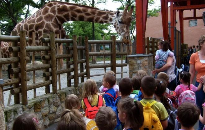 Ingyenes egy hétig a fővárosi állatkert a gyereknek!