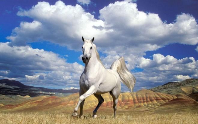 Lassított felvétel lovaktól- VALAMI CSODÁLATOS