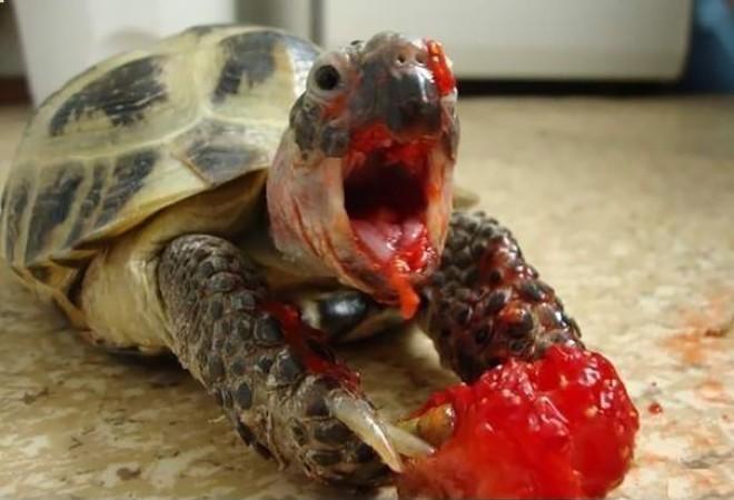 Evés közben mindenkiről szörnyű képek készülnek! Vajon az állatokról is?