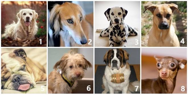 A 8 kutyából melyiket vinnéd haza legszívesebben? Sokat elárul rólad!