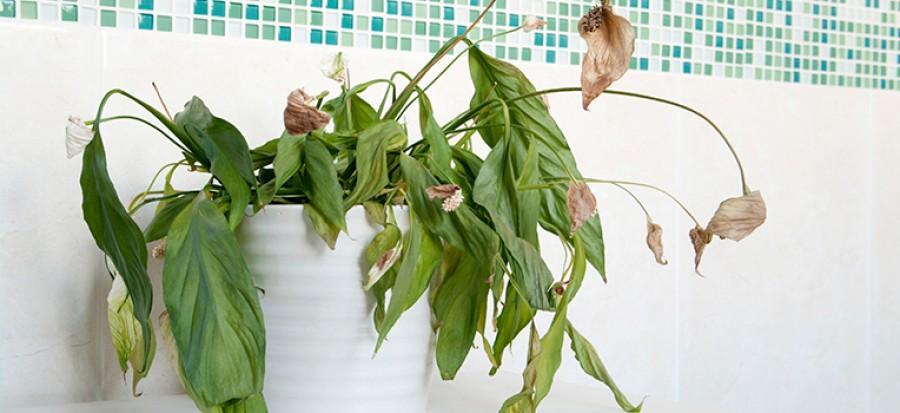 Így mentsd meg a haldokló növényeid!