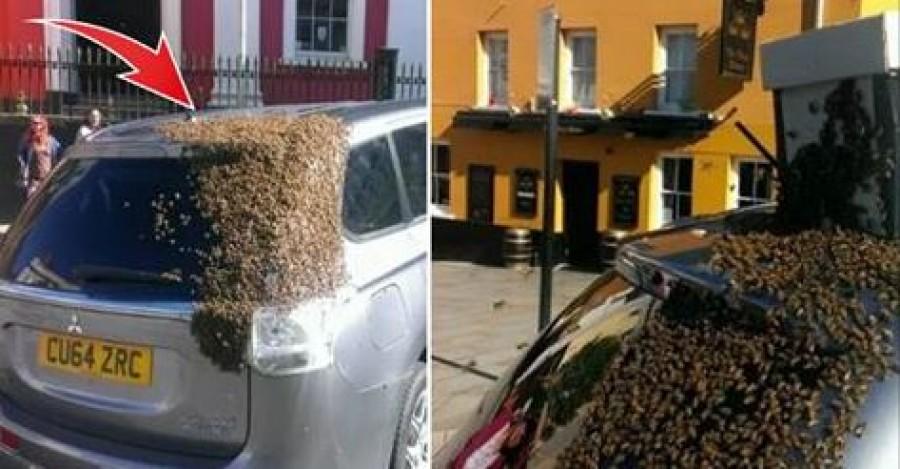 20,000 méh üldözte az autót 2 napon keresztül, hihetetlen, hogy mi késztette őket erre!