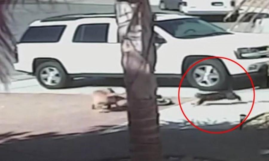 Fordult a kocka! Egy macska mentette meg a kisfiú életét!