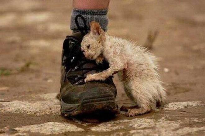 Egy kiscica, aki megtanított szeretni - megható történet!