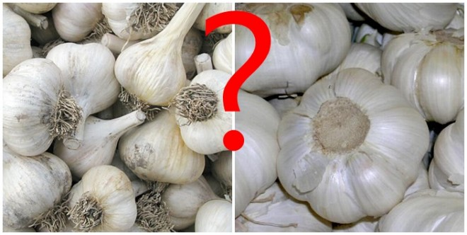 Kerüld el kínai fokhagymát! Vásárolj helyi termelőtől a piacon! Hatalmas a különbség!