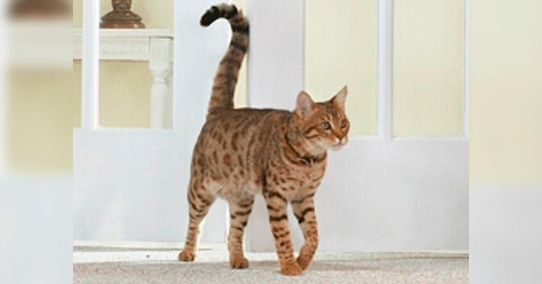 Ismerd ki a macskád titkait - speciális kommunikáció