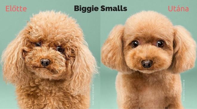 8 cuki kutya fotó kutyakozmetika előtt és után