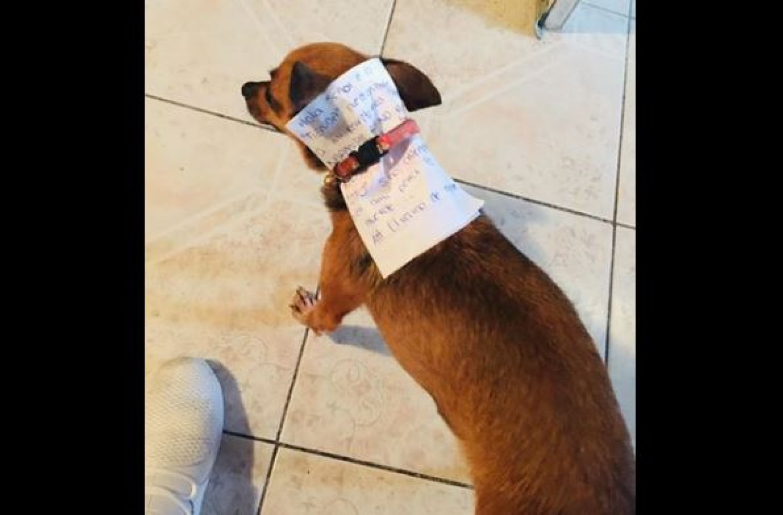 A kutyáját küldte le a boltba  - ezt hozta haza