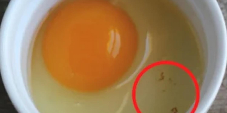 Apró véres pötty a tojásban - meg szabad enni, vagy nem?