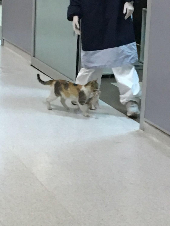 Bevitte a kórházba a beteg kölykét az anyamacska